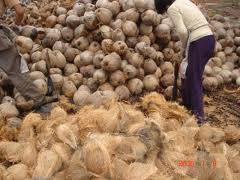 Sell-Old-Coconut-Cheap-In-Indonesia